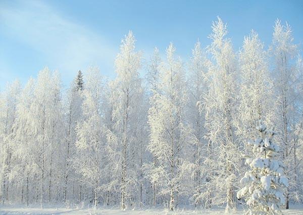 Finnland-im-Winter
